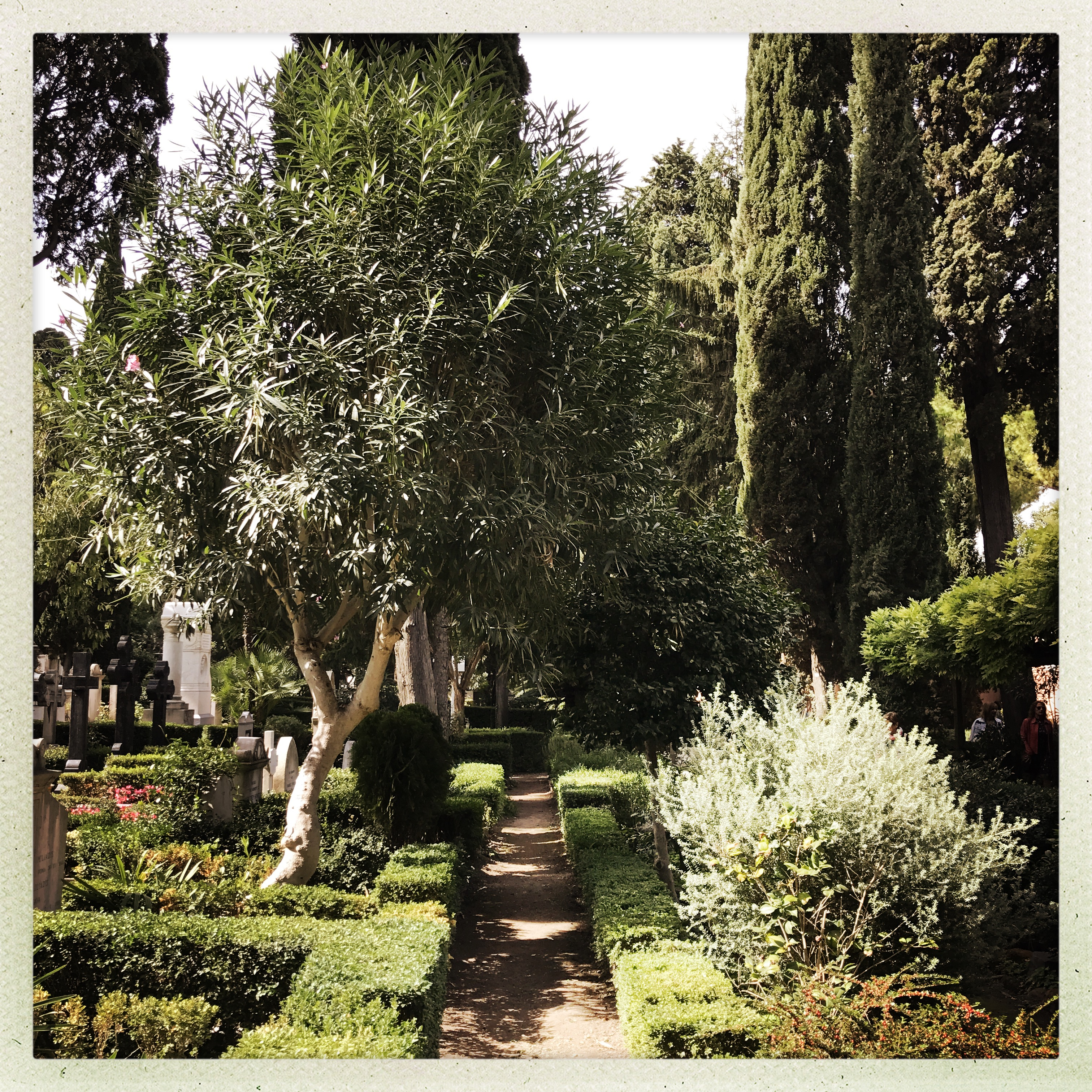 Protestant Cemetery_Rome